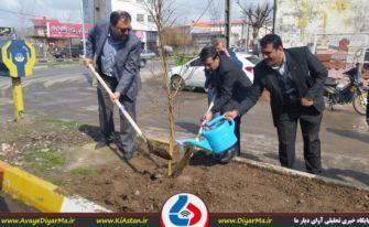 توزیع و کاشت بیش از 6 هزار و 500 اصله نهال در آستانهاشرفیه