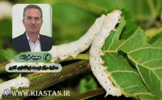 250 جعبه تخم نوغان در شهرستان آستانهاشرفیه توزیع شد